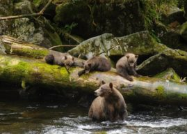 Trump Strips Protections from Tongass National Forest
