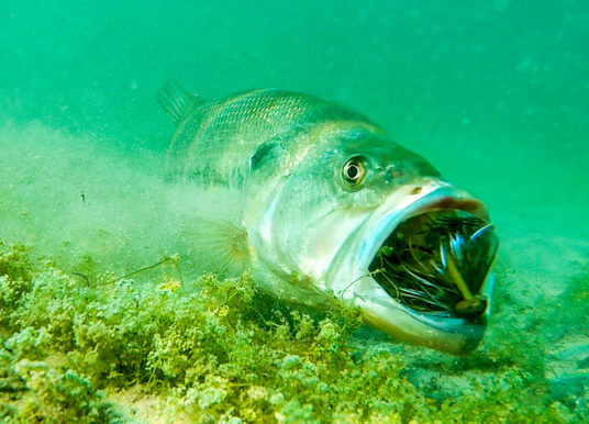 **Insane Underwater Footage** Fish Attacking Lures And Bass Fishing Tips! — Tactical Bassin'