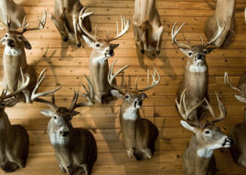 How Adam Hays Finds the Biggest Buck on a Property